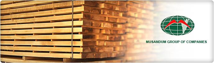 European Beech Wood KD